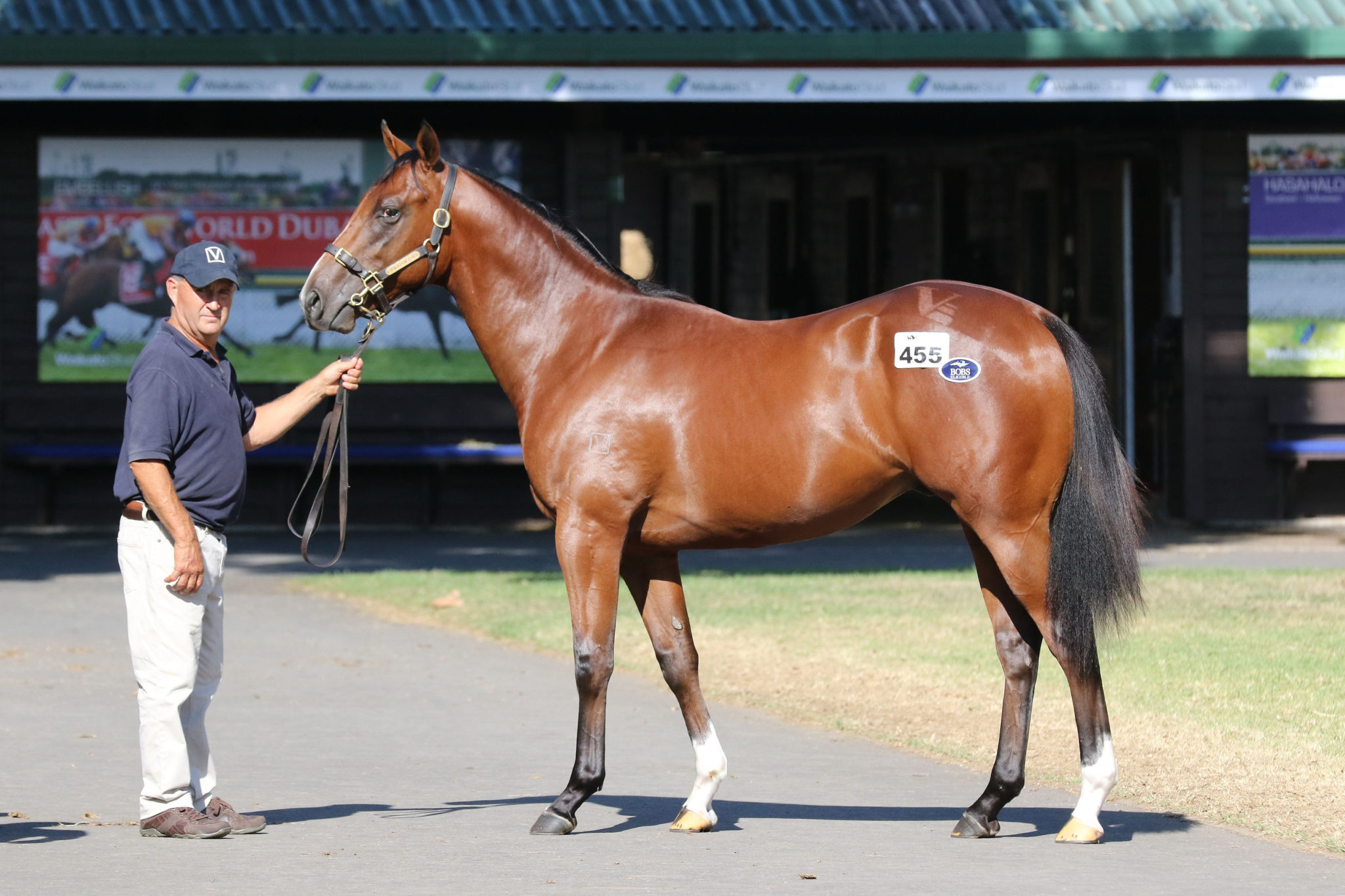 Lot 455 Exceed And Excel x Our Ella Belle 30 01 2018 GEN Karaka Yearling Sale 1201