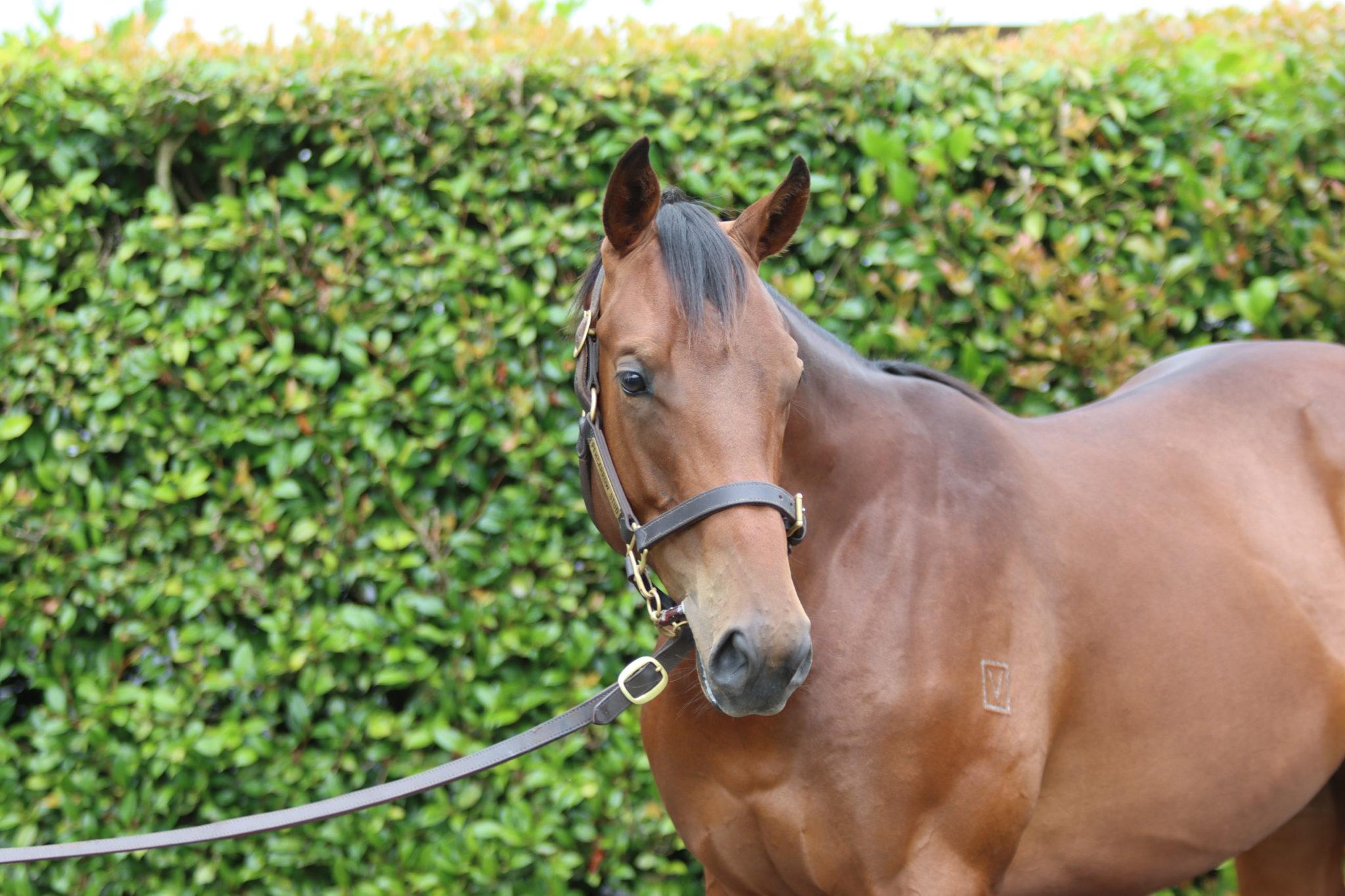 Grand Echezeaux 11 03 2000 GEN Flemington d22