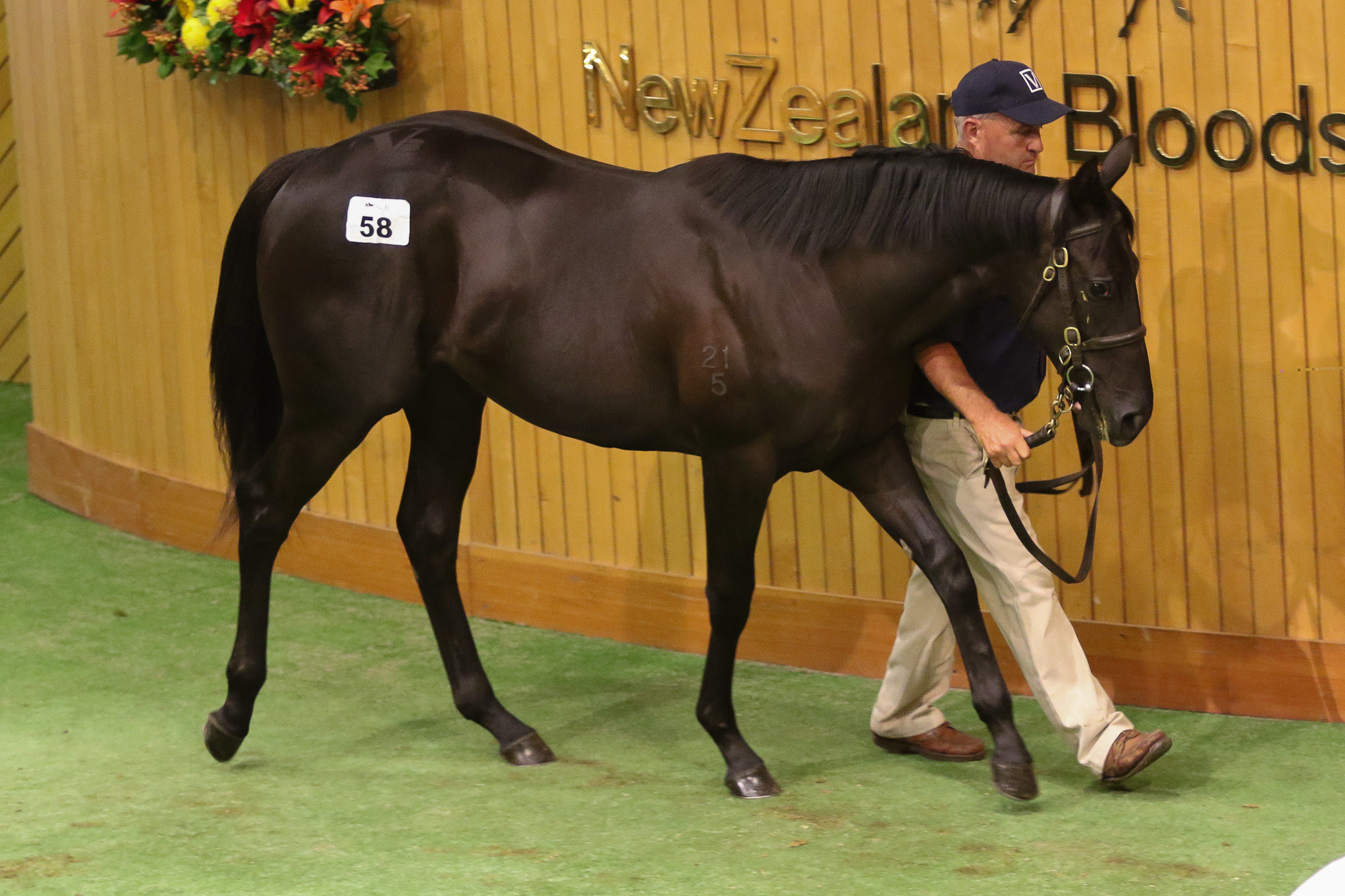 Lot 58 Savabeel Banchee 2