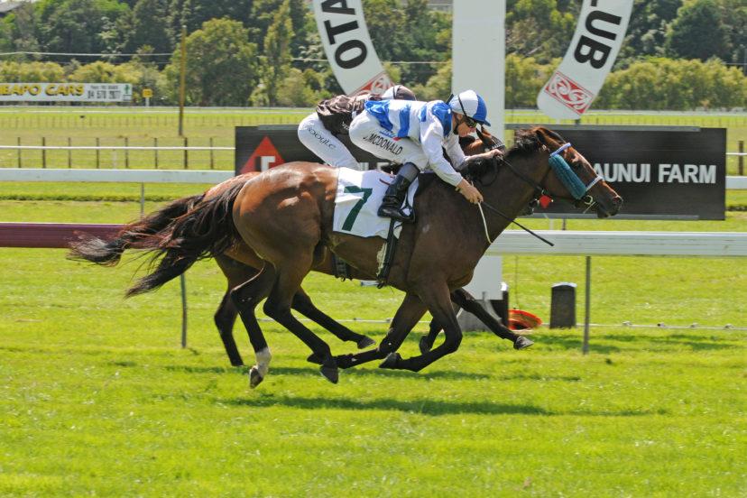PAPILIO HB 1 9 2012 RACE IMAGES PHOTO
