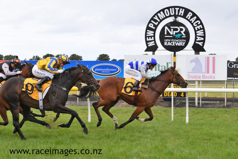 PALM SPRINGS TARANAKI 19 3 2020 RACE IMAGES PHOTO